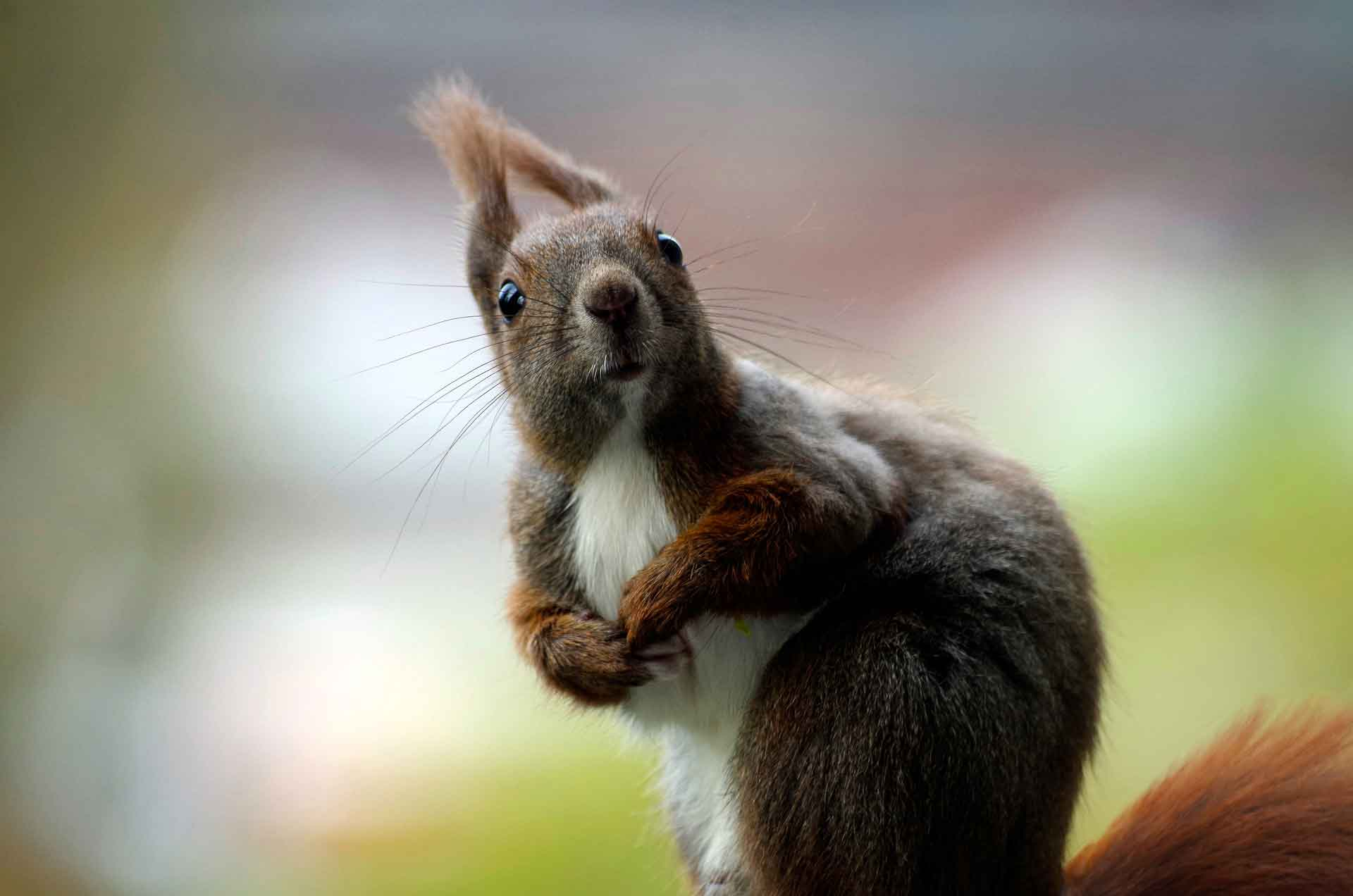 Ooh Look – Squirrels!